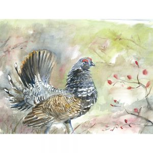 SG1520 chicken chick rooster field farm watercolour paint painting bird birds animal animals