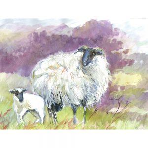 SG1521 sheep lamb field farm wool animal animals green purple watercolour paint paintings