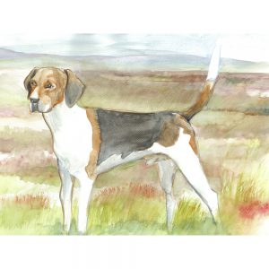 SG1522 beagle dog dogs animal animals field farm terrier watercolour paint painting