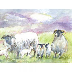 SG1524 sheep lamb field farm wool animal animals green purple watercolour paint paintings ram