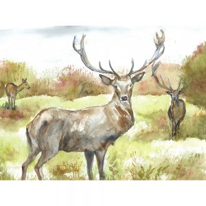 SG1525 deer stag nature wild animal animals antlers forest woodland watercolour paint painting