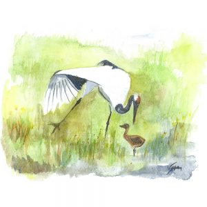 SG1550 birds crane stork field river pond wings watercolour painting animal