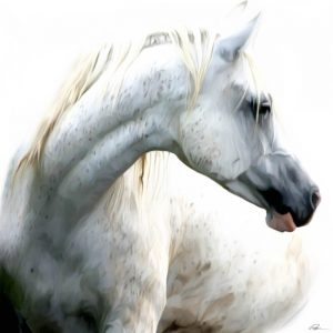 SG1730 horse white maine freckles grey horses paint painting
