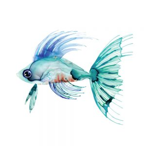 SG1769 tropical fish green blue turquoise orange colourful