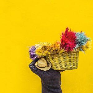 Colour Themes