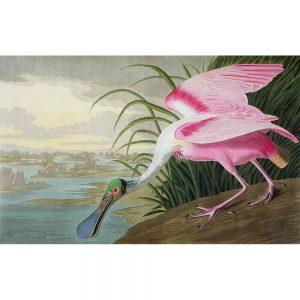 SG1879 roseate spoonbil birds america pink beak bill claws landscape wings reeds river water