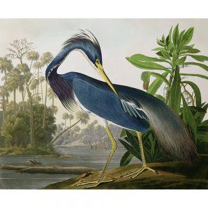SG1897 birds blue heron river beak bill claws landscape wings water