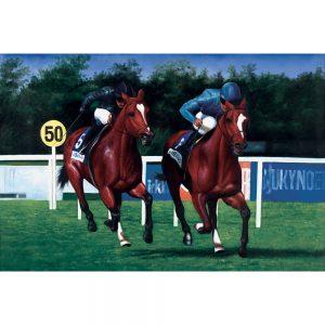 SG263 horses race racing jockey sports