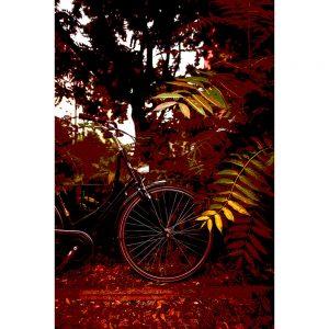 TM1551 bicycles classic maroon