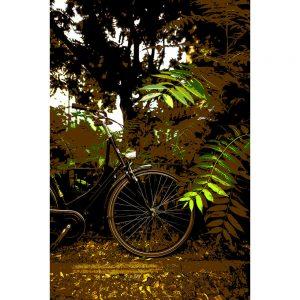 TM1552 bicycles classic brown