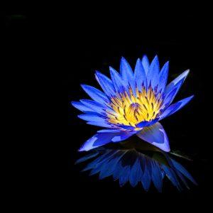 TM2821 flower petals reflection blue