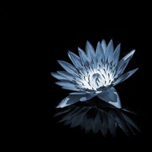 TM2824 flower petals reflection light blue