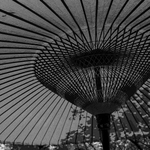 TM2864 large canopy umbrella mono